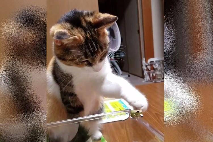 とっても優しいタッチでカエルを触る猫ちゃんの動画がかわいい!