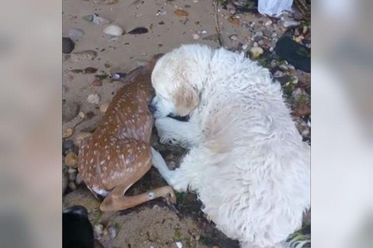「生きろ!生きるんだ!」海で溺れる子鹿を命懸けで助けるヒーロー犬に心震える