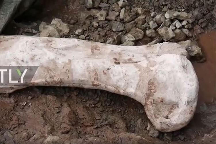 【動画】未知の部類か!?スペインで巨大恐竜の骨が80本以上発掘される!