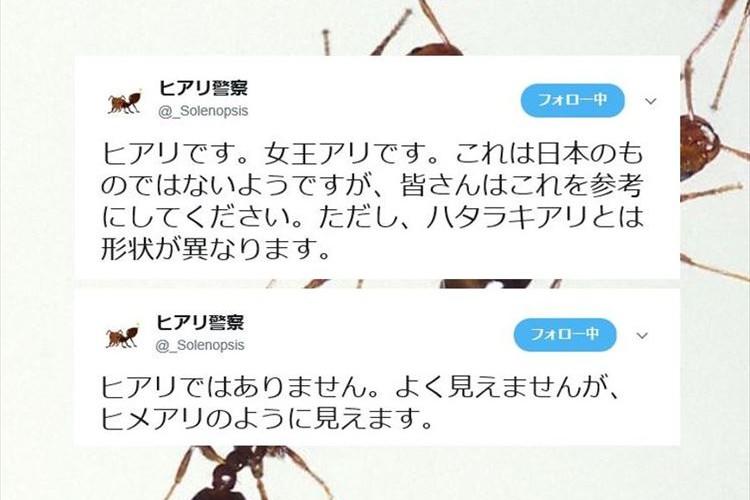ヒアリかどうかを識別してくれる『ヒアリ警察』さんがスゴイと話題に!!
