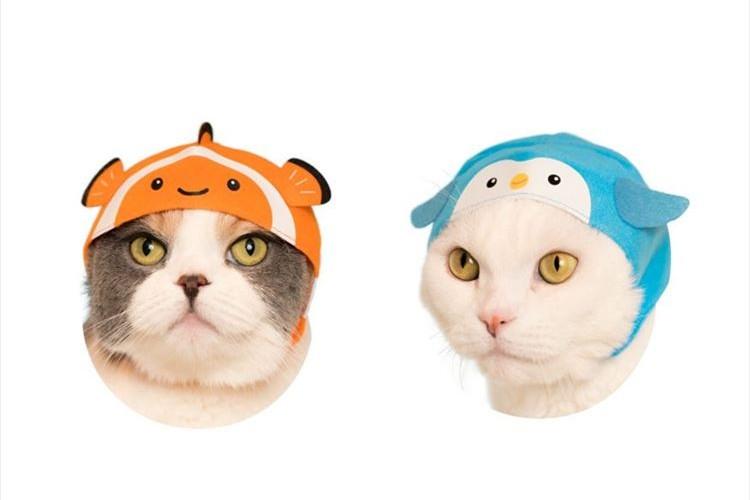 なんだかジワる…水族館の人気者をモチーフにした猫のかぶりものが発売!