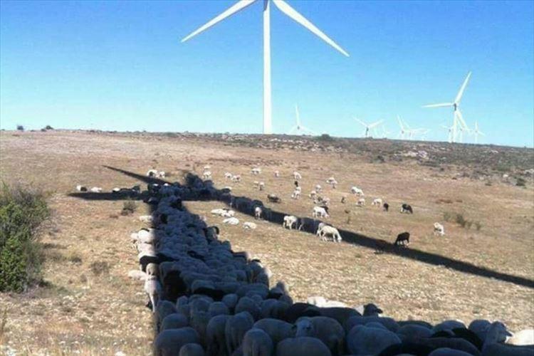 風車の新しい利用法か!? 風車の影に隠れて暑さをしのぐヒツジの群れが話題に
