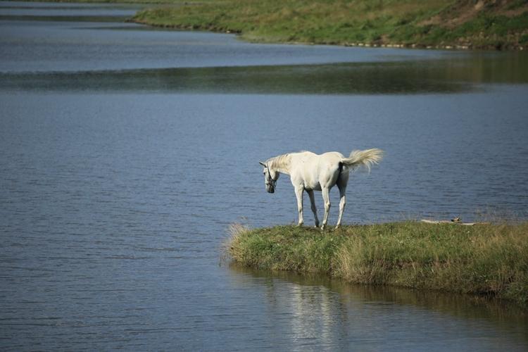 北海道でたまたま見かけた白馬があまりにも完璧な位置取りで神秘的すぎた!