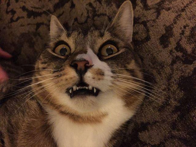 cat_01_640