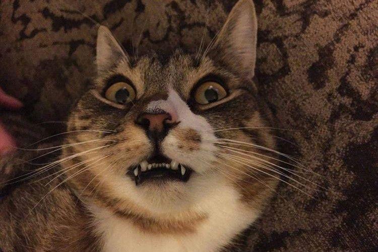 めちゃくちゃ顔ひきつってるやん!自撮りが苦手な8匹の猫ちゃんたち