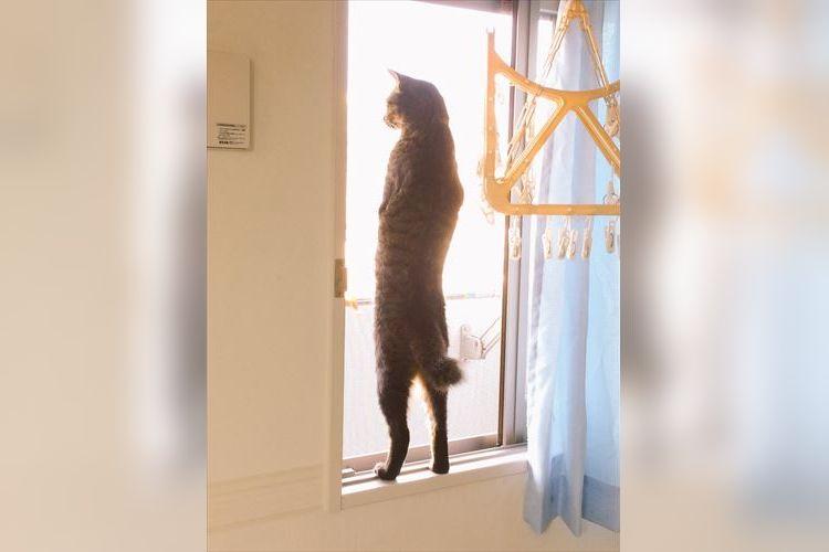 「猫背とは何か…」その言葉の意味を覆すほど姿勢が良すぎるニャンコたち