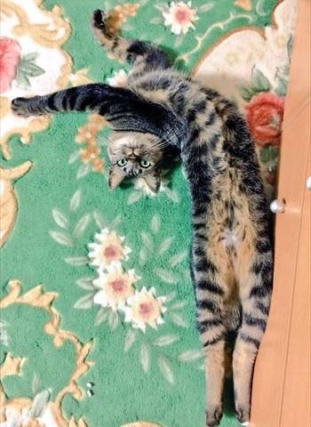 cat_02_350