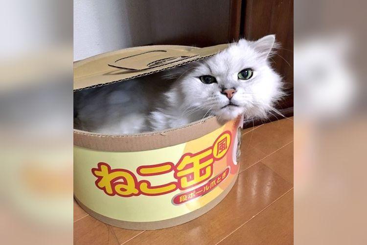 めちゃんこ可愛い~!大きな『ねこ缶』の中に入っている正体に胸キュン!