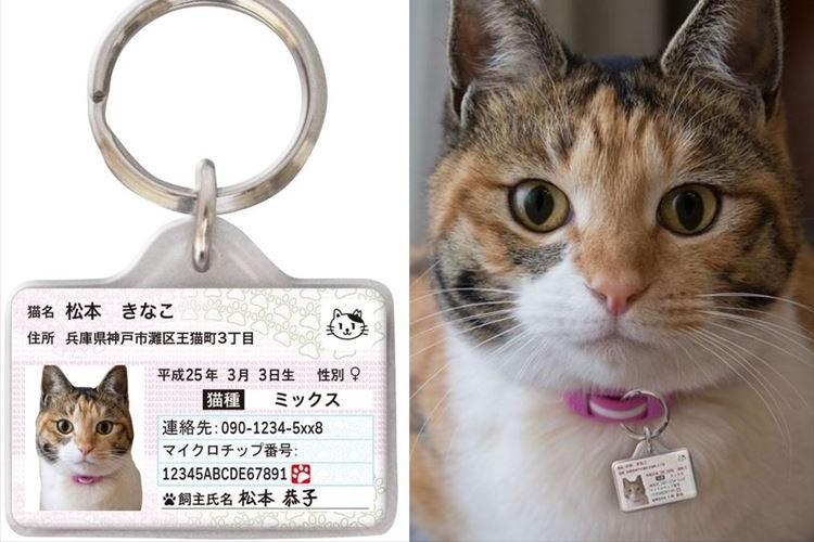 愛猫の身分証明書「マイニャンバーカード」の『迷子札バージョン』が登場!