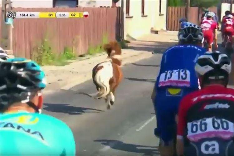 【動画】自転車レースに乱入したポニーがライダーと同化…たてがみを振り乱して爆走!