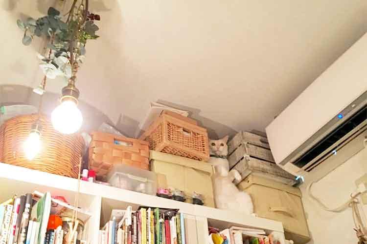 「吾輩は家具である」本棚と一体になっているニャンコが可愛いと話題に!