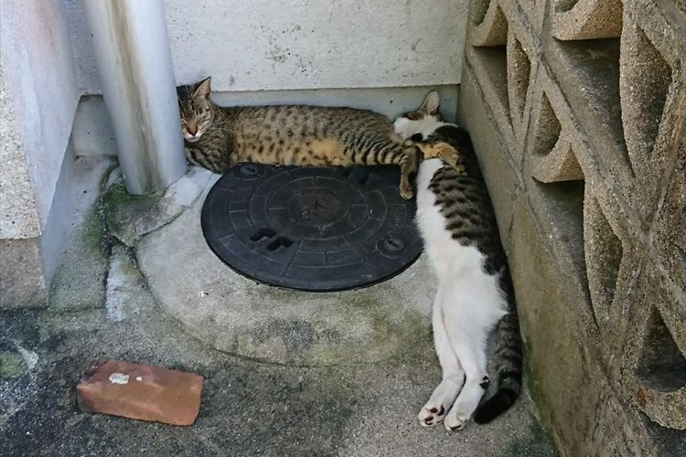 """近所の野良猫が""""テトリス""""を彷彿とさせる形で寝ていた…ブロックに見えてくる不思議"""