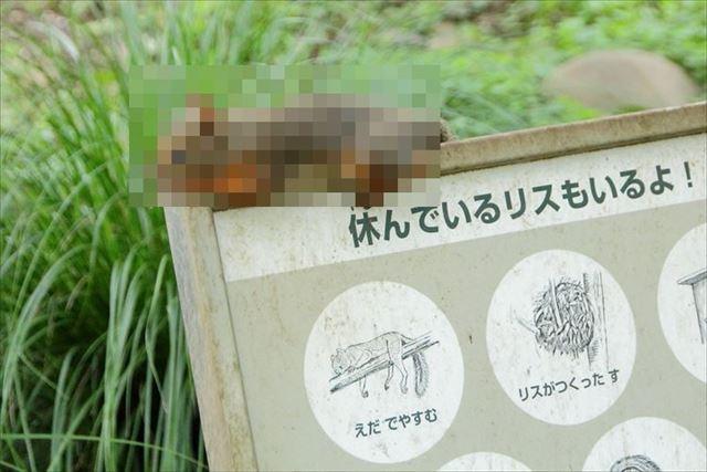 risu_01_main