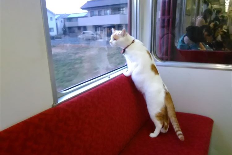 日本初!子猫たちと列車の旅ができる「ねこカフェ列車」が1日限定で運転!