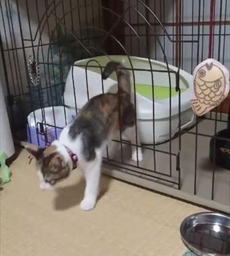cat_01_450