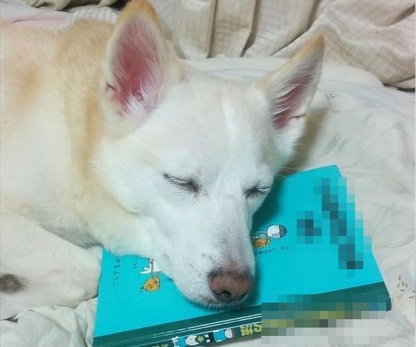 dog_01_main