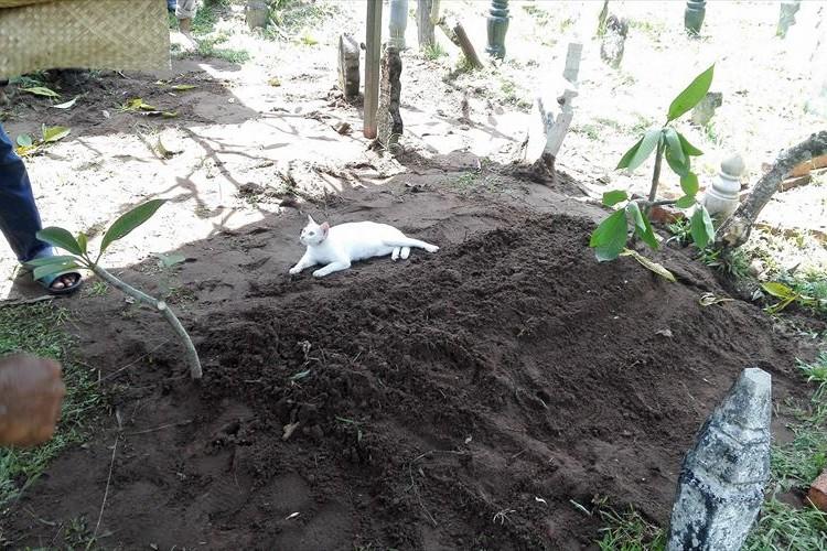 葬儀中に現れた白猫、何があっても愛する人から離れようとしないその姿に涙が溢れる