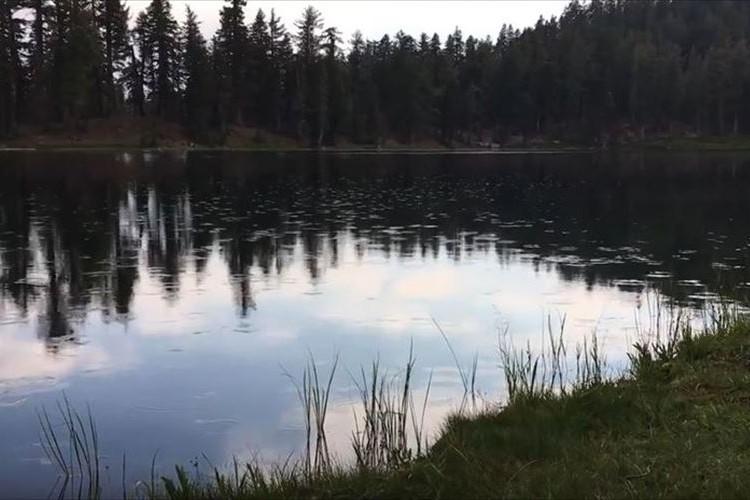 【動画】一体何事!?男性が声をあげると、池の表面のあちらこちらに波紋が!