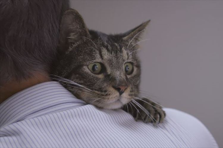 【検証動画に涙】猫は2年前まで一緒に過ごした飼い主の声を覚えているか?