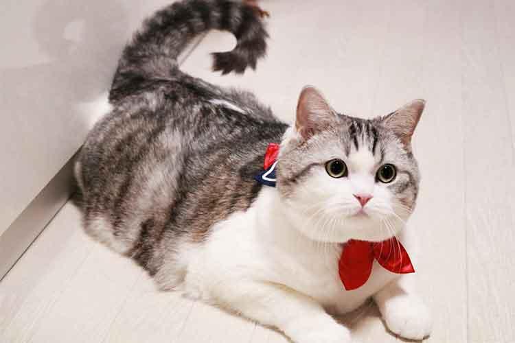 セーラー服風な首輪がとってもキュート!猫の首まわりが白い→セーラー服の雰囲気を醸し出す