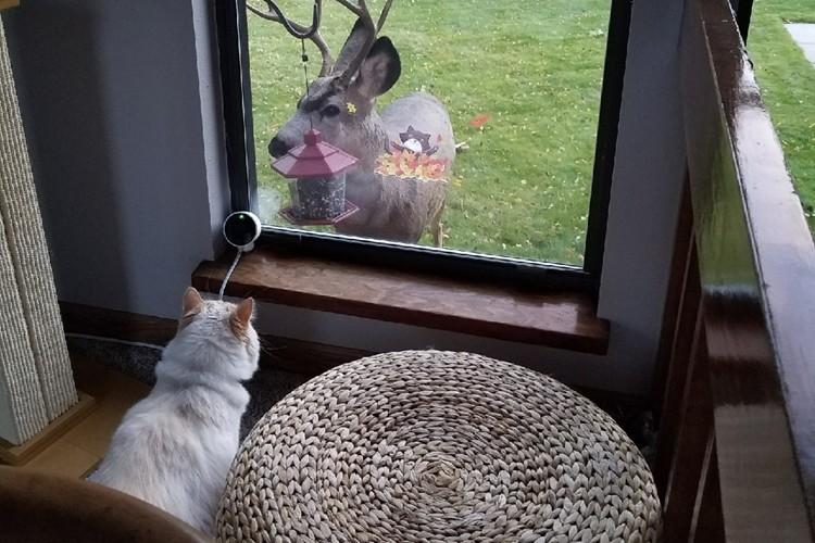 【不思議な力を持つ猫】まるでディズニー映画!?野生動物を引き寄せる不思議な猫ちゃん