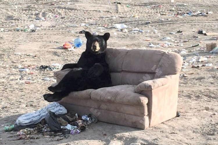 もしかして足組んでる!?捨てられたソファーでくつろぐ野生のクマが人間みたい
