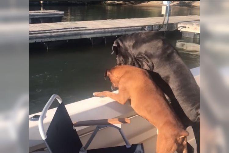 「パパ…大丈夫?」愛犬たちもあ然してしまった飼い主さんの悲劇とは…!?