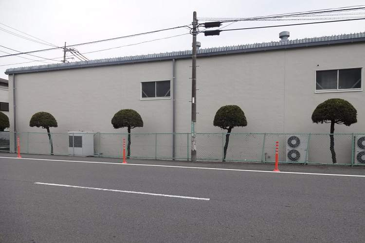 【悲報】こちらの写真に写っている4本の木、4年経ったらグレてしまいました…(笑)