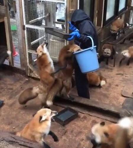 fox_01_450
