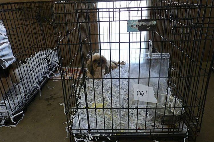 保護犬以外のペット販売を禁止に!悪質なブリーダー排除のための法案が成立