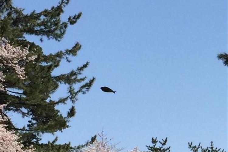 空中にヒラメみたいなのが飛んでるんだけど一体何!?その正体は…