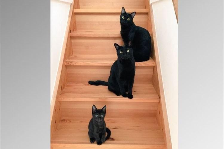 「二階に行きたければ我々を倒してからだ…」立ちはだかるニャンコたちが話題に!