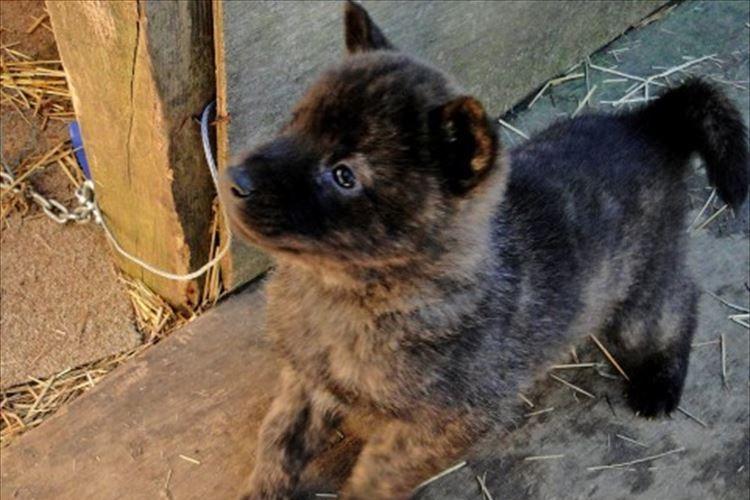 「なるほどこの手があったか!」名古屋市がふるさと納税で犬の殺処分ゼロを達成!