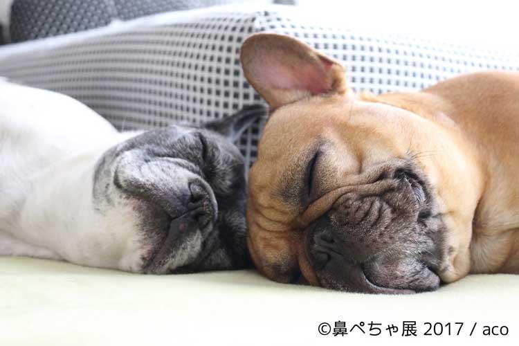 インスタ有名犬が大集合!『鼻ぺちゃ犬』に特化したイベントが浅草で開催!