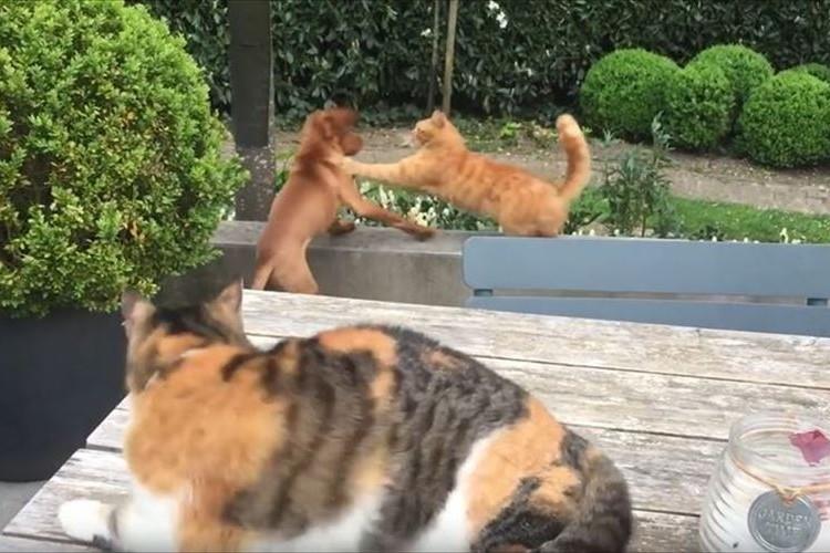 親友のワンコがとあるニャンコに攻撃される→すかさず助けに行くニャンコ