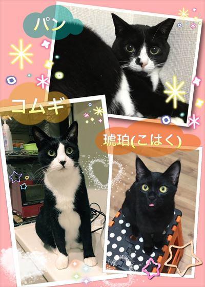 cat_02_400