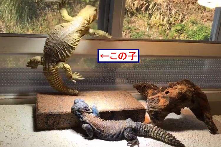"""笑わせようとしてるでしょ…?(笑)この子が今から昭和のマンガのような""""コケ方""""をします。"""