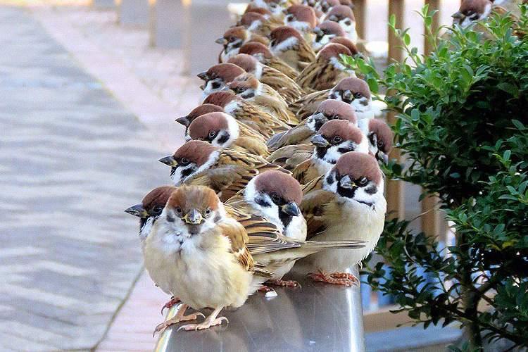 チュンチュンの大整列!たくさんのスズメたちがキチンと並ぶ様が愛らしすぎる♡