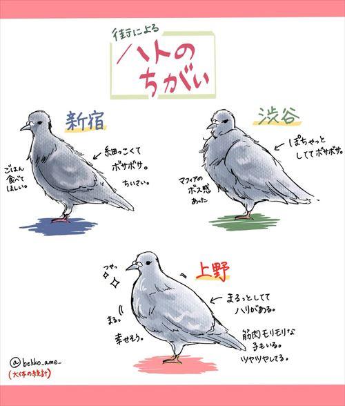 hato_01_500