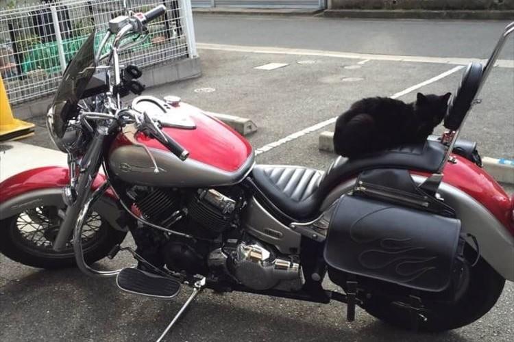 バイクに猫が居座り困っていた→座布団を敷いてあげた→持ち主の心境にとある変化が…