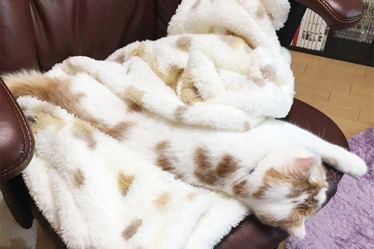 同化しすぎでしょ!どこからが毛布で、どこからがニャンコか分からないと話題に!