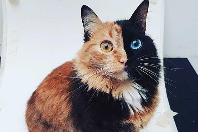 まるで神話に出てくる猫のよう…2つの顔をもつ猫が美しいと話題に!