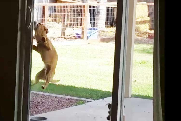 まさか!そんな方法で戸を開けるとは…忍者ワンコの脚力と執念が凄すぎると話題に!