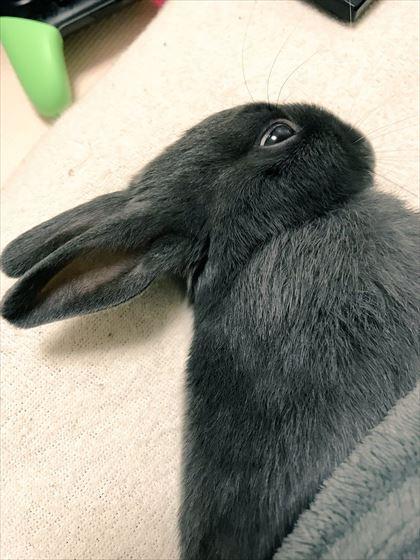 rabbit_01_420
