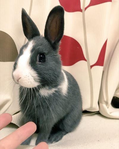 rabbit_03_400