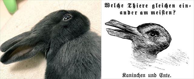 rabbit_04_640