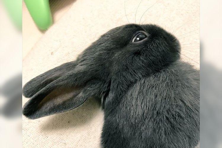 """耳が口ばしに見えるぞ!?あの有名な""""だまし絵""""みたいな顔で寝るウサギが可愛い"""