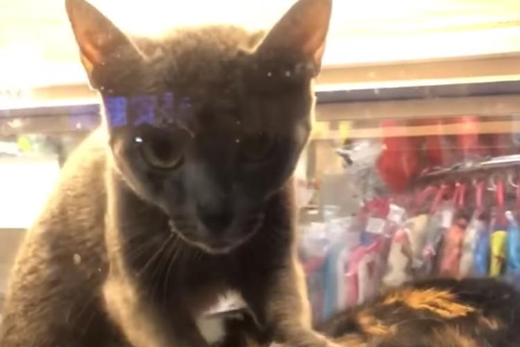 台湾式マッサージ界の神猫?確実にゴッドハンドな猫様が発見される!