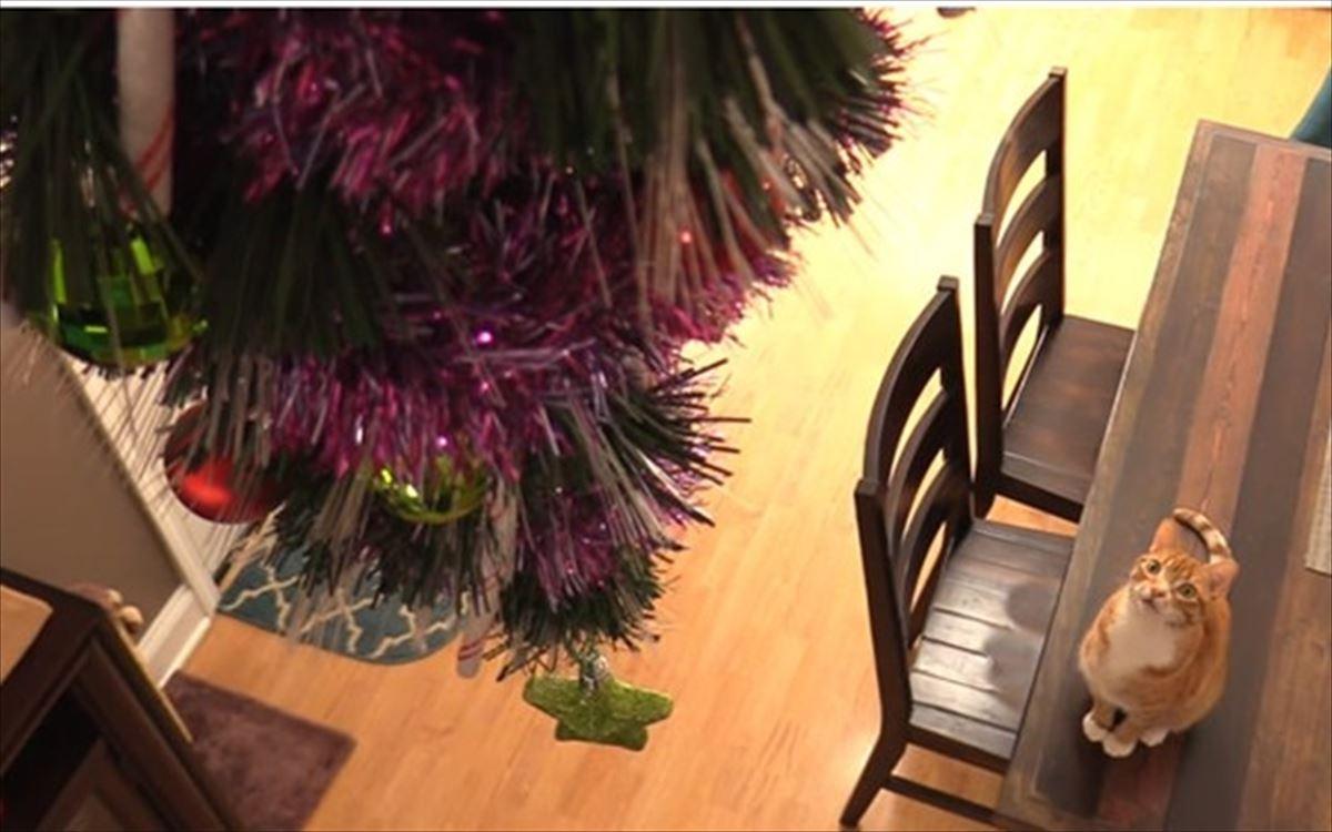 みんなが知恵を絞ったクリスマスツリーの猫対策8選!
