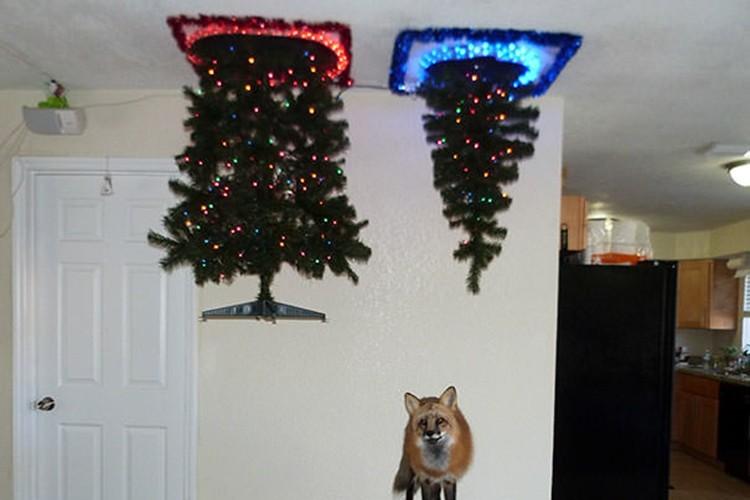 ペットにめちゃくちゃにされない為の天才的なクリスマスツリー